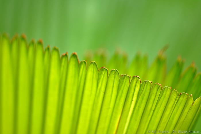 Concertina Green
