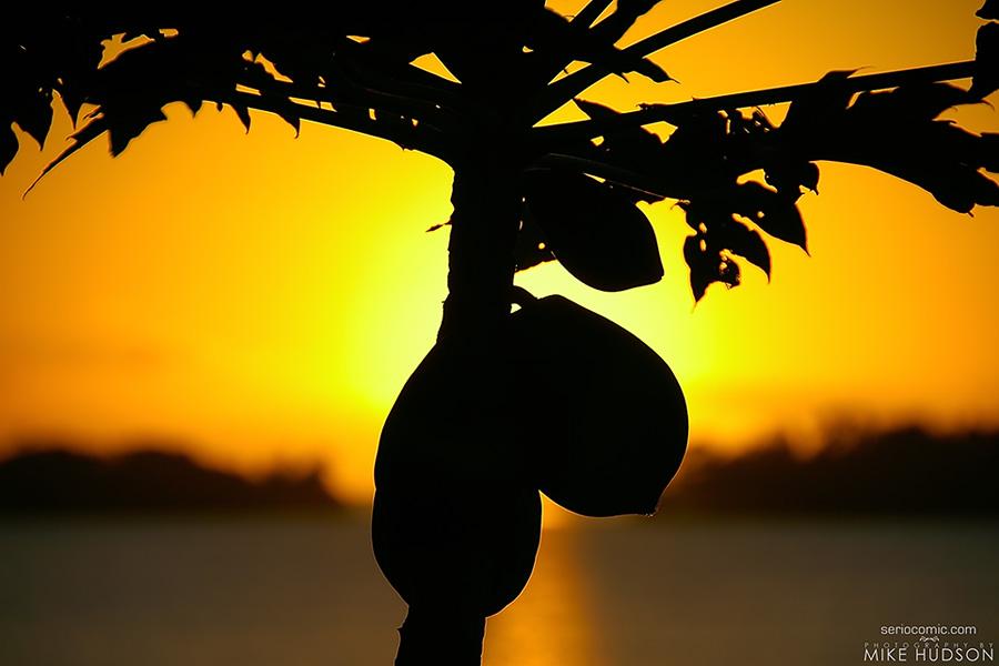 Bunch-a-Coconuts