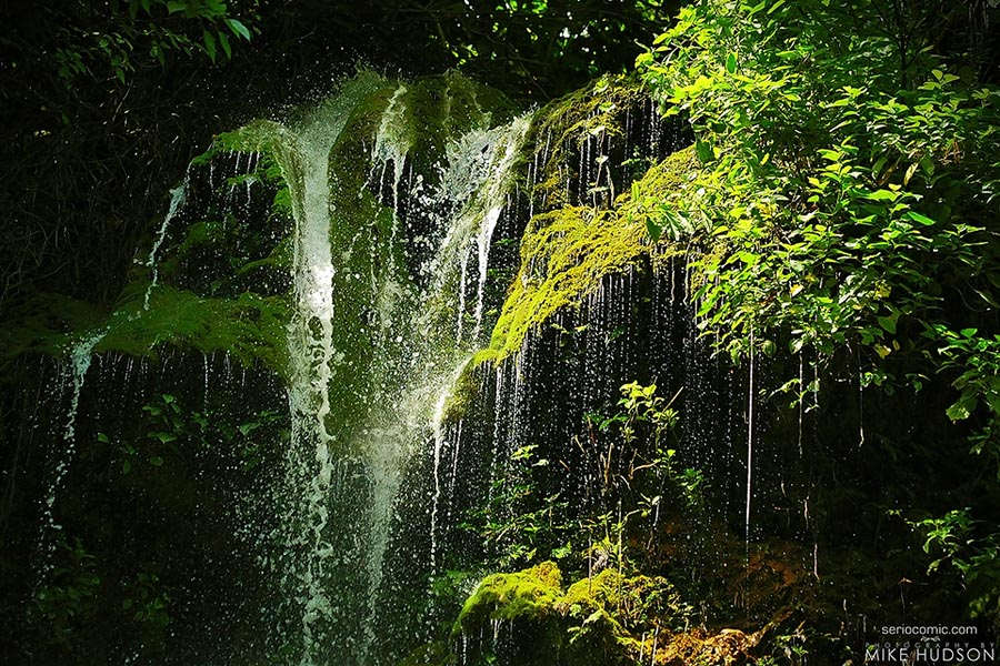 Jungle Overflow