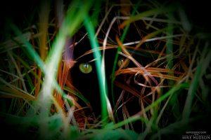 Hunter Hiding