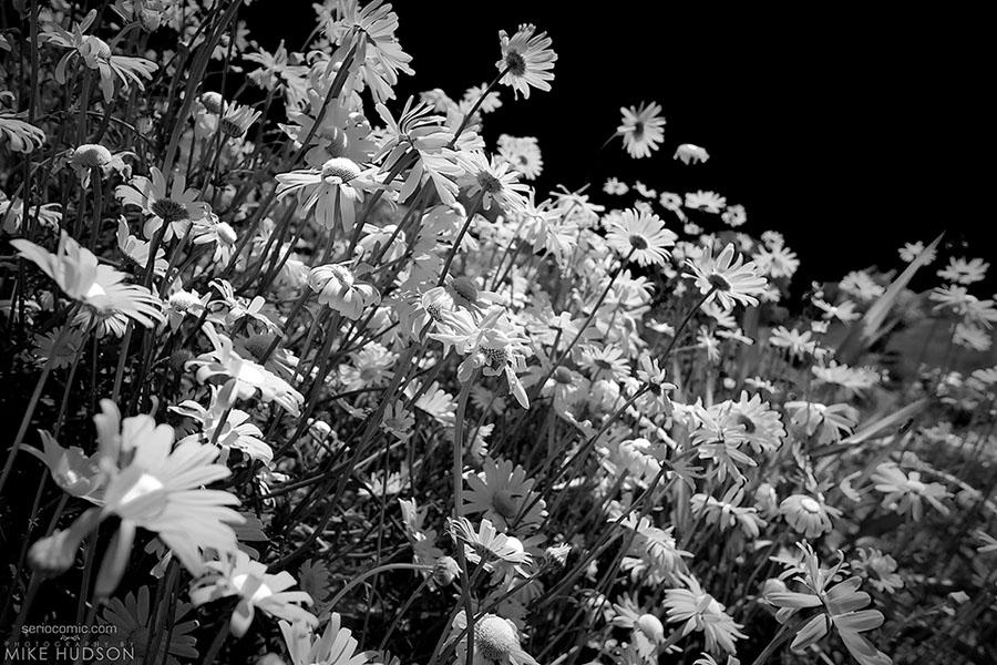 Flower Bank (IR)