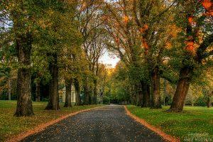 Fitzroy Walkway
