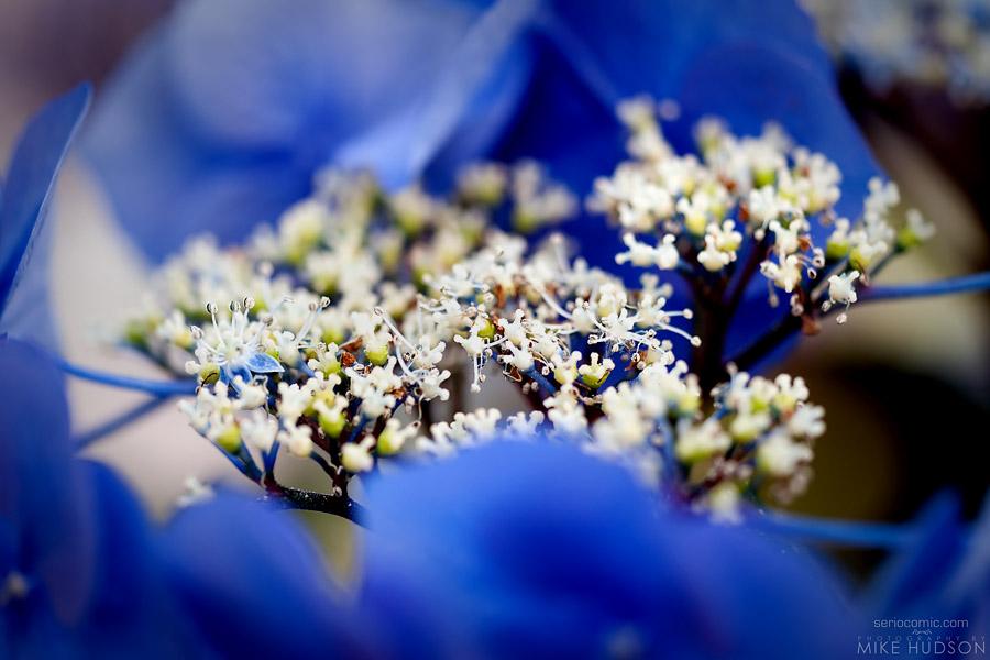 Blue Cradle