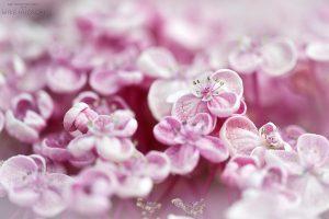 Natural Softness