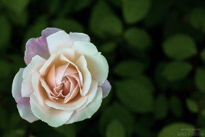 Singular Softness