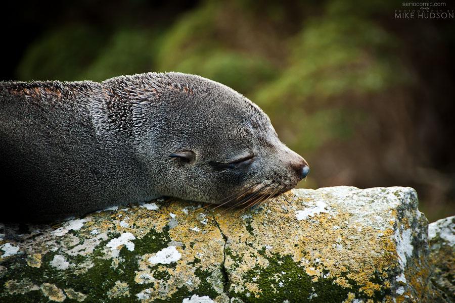 Seal Snooze