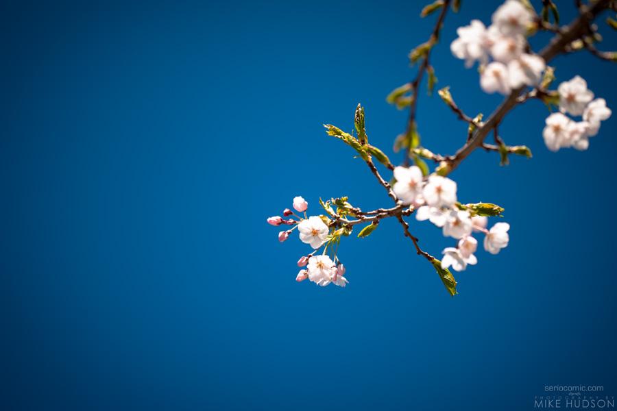 Spring Blue