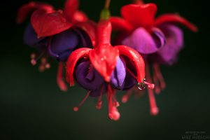 Drop of Color