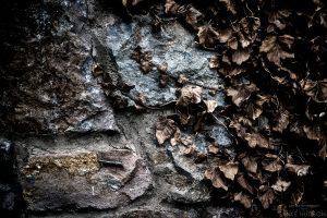 Dead Wall