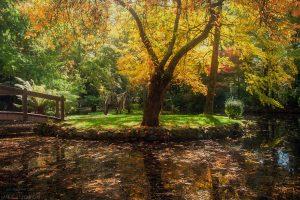 Autumn Bridges #1
