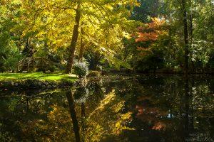 Autumn Bridges #2